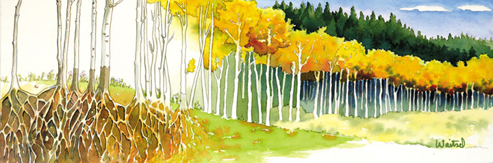Waitsel's Watercolor Painting - Aspen Trees