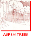 Waitsel Ink Illustration Landscape Aspen Trees