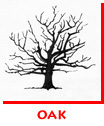 Waitsel Ink Spot Illustration Oak Tree